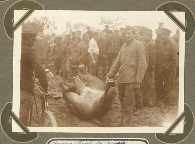 Paarden getroffen door kwade droes, Adinkerke 25 augustus 1915