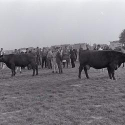 Veeprijskamp, Staden september 1971