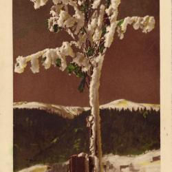 Beeldzijde nieuwjaarskaart, besneeuwde boom in berglandschap
