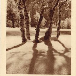 Beeldzijde nieuwjaarskaart, winters sneeuwlandschap met bomen