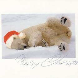 Beeldzijde kerstkaart, ijsbeer met kerstmuts