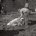 Kinderboerderij, Westrozebeke mei 1977