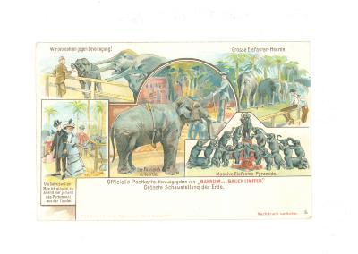 Officiële postkaart van het Barnum en Bailey circus met olifanten