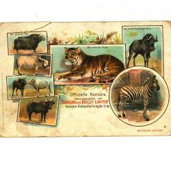 Officiële postkaart van het Barnum en Bailey circus met allerlei dieren