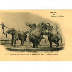 Postkaart met olifanten van het Barnum circus