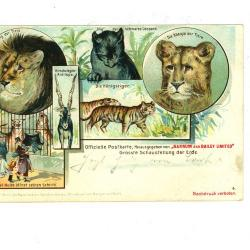 Officiële postkaart van het Barnum en Bailey circus met katachtigen en antilope
